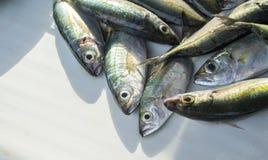 在晴朗的鱼市桌上的银色绿色热带鱼 厨师的镶边珊瑚鱼 免版税库存照片