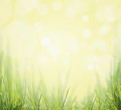 在晴朗的绿草boken自然背景 免版税图库摄影