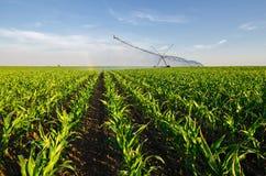 在晴朗的summ的农业灌溉系统浇灌的麦地 免版税库存图片