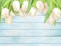 在绿松石木后面的白色郁金香 10 eps 免版税库存图片