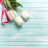 在绿松石木板条的三白色郁金香 免版税库存图片