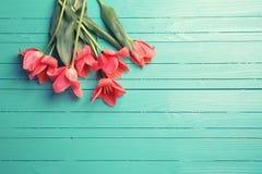 在绿松石的新鲜的桃红色郁金香绘了木背景 库存照片