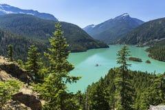 在绿松石Diable湖上的树 免版税库存图片