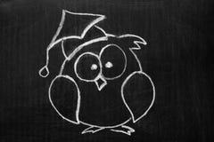 在黑板的猫头鹰 库存图片