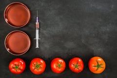 在黑板的蕃茄基因上修改过的食物 免版税图库摄影