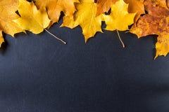 在黑黑板背景的黄色秋叶 免版税库存图片