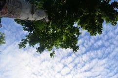 在结构树下 库存图片