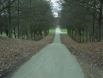 在结构树之间的路 免版税库存图片