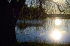 在结构树杨柳的湖 免版税库存图片