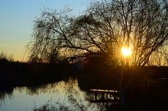 在结构树杨柳的湖 库存照片