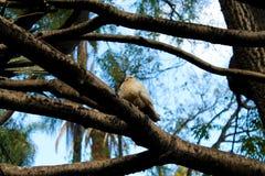 在结构树的一只鸟 库存图片