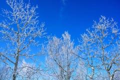 在结构树的冰 图库摄影