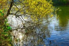 在结构树的分行湖 库存照片