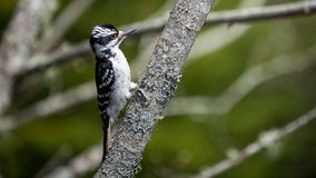 在结构树的啄木鸟 图库摄影