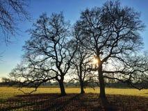 在结构树的太阳 免版税库存图片