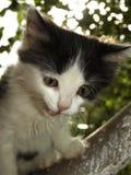 在结构树的小猫 免版税库存图片