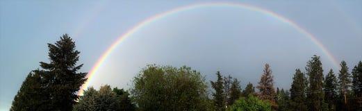 在结构树的彩虹 免版税库存图片