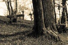 在结构树的摇摆 免版税库存照片