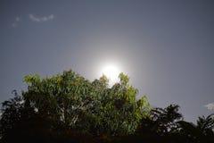 在结构树的月亮 免版税库存照片