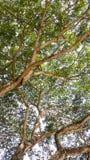 在结构树的树荫之下 库存图片