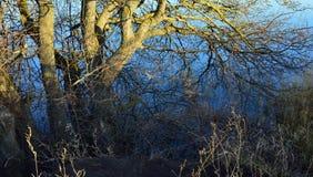 在结构树的湖 免版税库存照片
