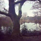 在结构树的湖 库存照片
