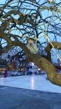 在结构树的猫 库存照片