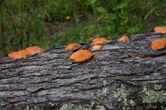 在结构树的真菌 库存图片