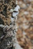在结构树的真菌 免版税库存照片