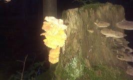 在结构树的蘑菇 免版税库存图片