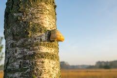 在结构树的蘑菇 免版税库存照片