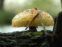 在结构树的蘑菇 库存图片