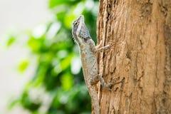 在结构树的蜥蜴 库存照片