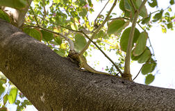 在结构树的蜥蜴 图库摄影