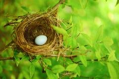 在结构树的鸟嵌套 免版税库存图片