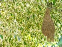 在结构树的鸟嵌套 库存图片