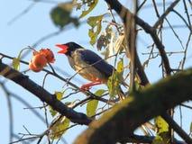 在结构树的鸟 免版税库存照片
