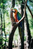 在结构树的鹦鹉 免版税库存图片