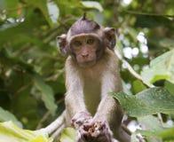 在结构树的猴子 图库摄影