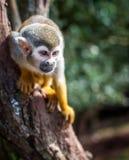 在结构树的猴子 免版税库存照片