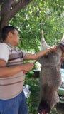 在结构树的绵羊 免版税库存照片