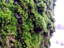 在结构树的绿色青苔 免版税库存照片