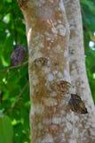 在结构树的蝴蝶 免版税库存照片