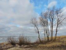 在结构树附近的湖 免版税库存照片