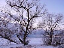 在结构树附近的湖 免版税图库摄影
