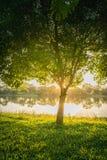 在结构树附近的湖 免版税库存图片