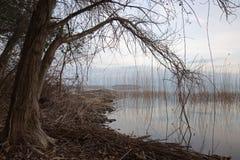 在结构树附近的湖 库存照片