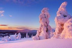在冻树的日落在山,芬兰拉普兰 免版税图库摄影