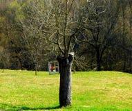 在`树的窗口` 库存照片