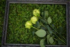 在画框的3朵玫瑰 图库摄影
